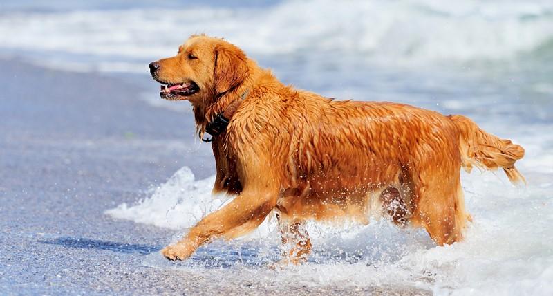 135-spiagge-cani-nord-sardegna